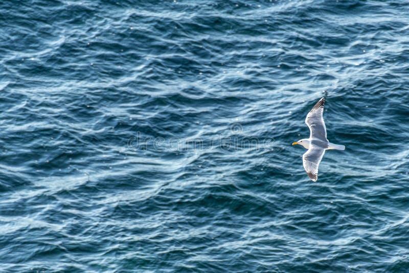 Único voo da gaivota de mar contra a superfície azul do mar com ondas Vista superior fotos de stock