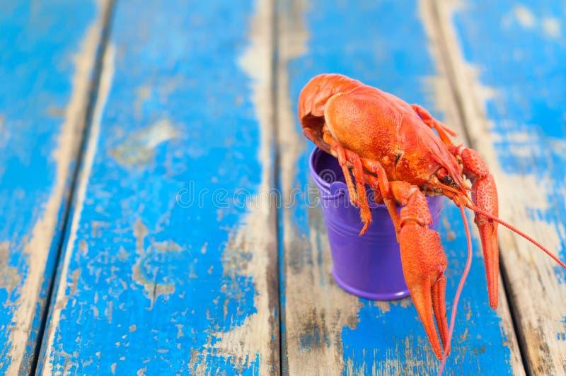 Únicos lagostins fervidos vermelhos inteiros na cubeta violeta vazia do metal foto de stock royalty free