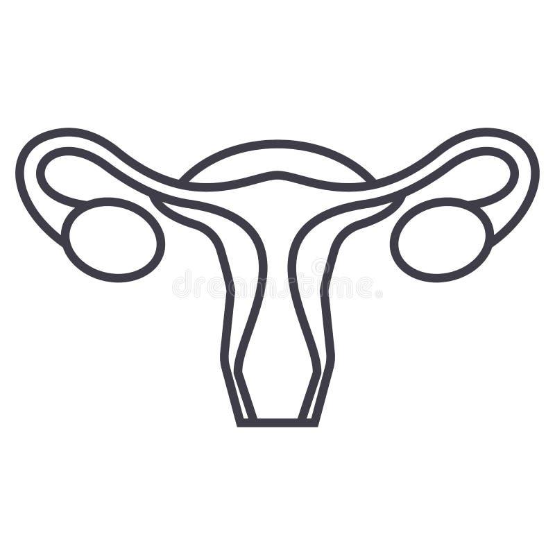 Útero, linha fêmea ícone do vetor da ginecologia, sinal, ilustração no fundo, cursos editáveis ilustração stock