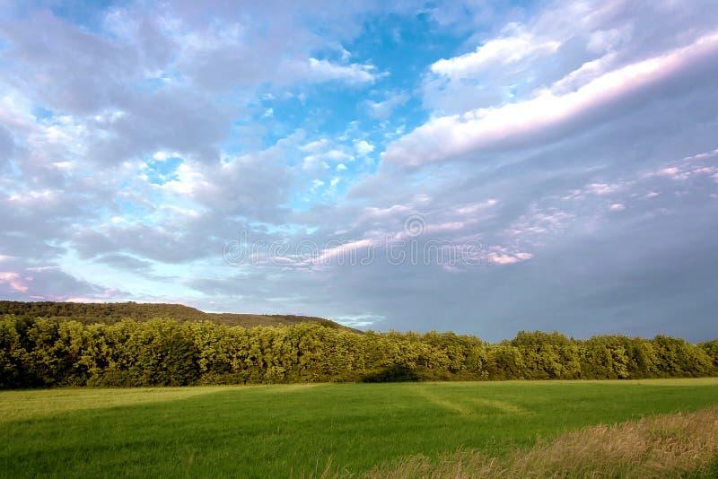 Über dem Feld mit üppigem Sommer des grünen Grases, heller blauer hoher Himmel des Frühlinges mit dichten schönen Kumuluswolken stockbild