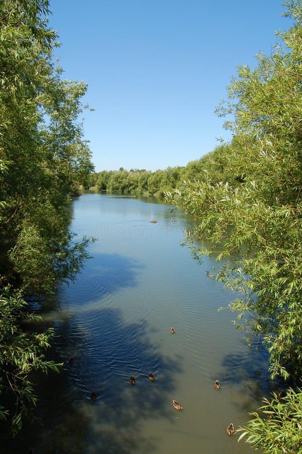 Über dem Fluss stockbild