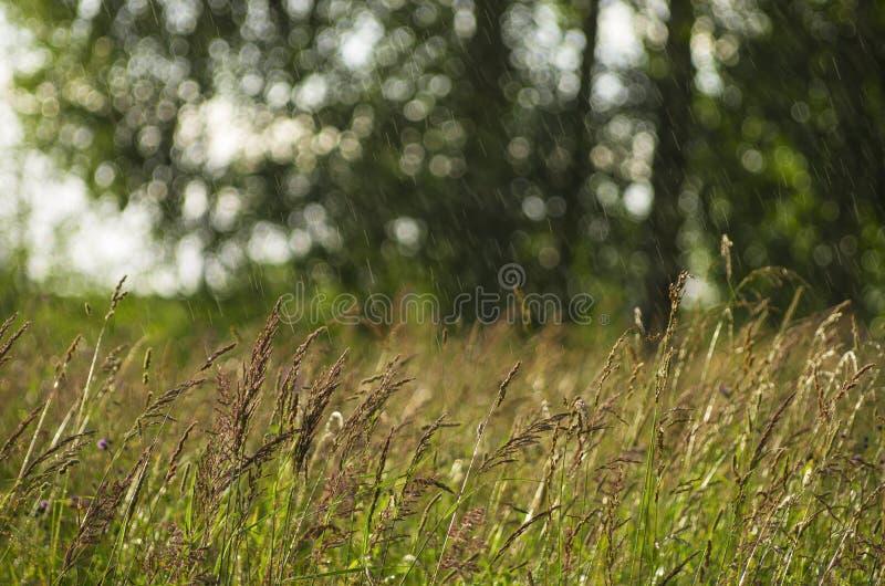 Über dem nieselnden Regen der grünen Sommerwiese stockbilder