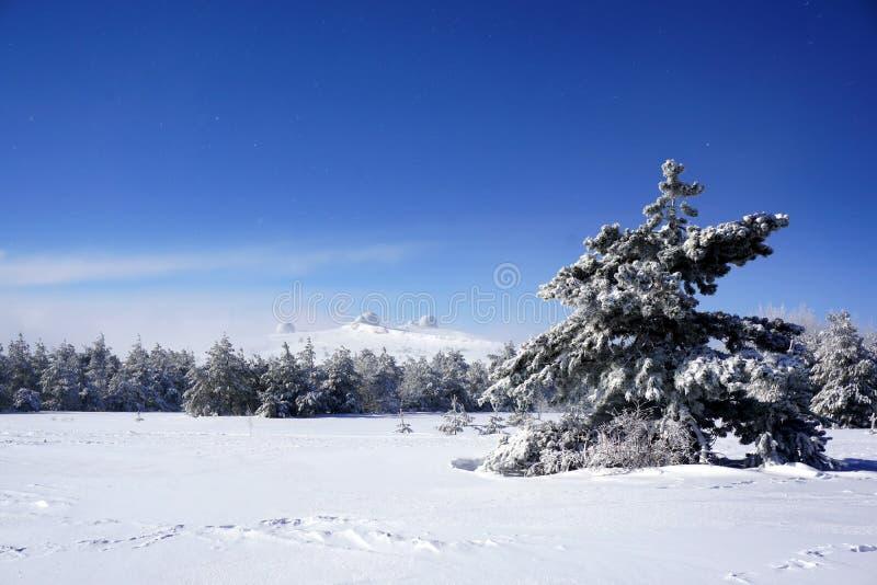 Über dem schneebedeckten Wald sein können gesehene Hauben lizenzfreies stockfoto