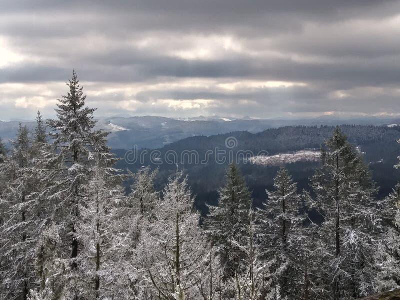 Über den Bäumen 2 lizenzfreie stockbilder