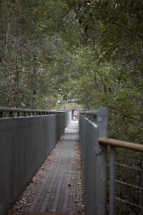 Überbrücken Sie Gehweg in einen Wald stockbilder