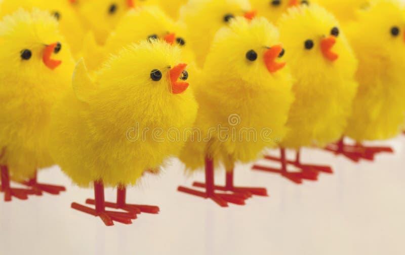 Überfluss an Ostern-Küken, selektiver Fokus lizenzfreies stockbild