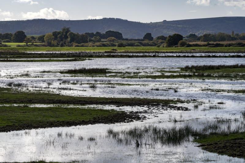 Überflutete Landlandschaft natürlicher Lebensraum für wild lebende Tiere lizenzfreie stockfotografie