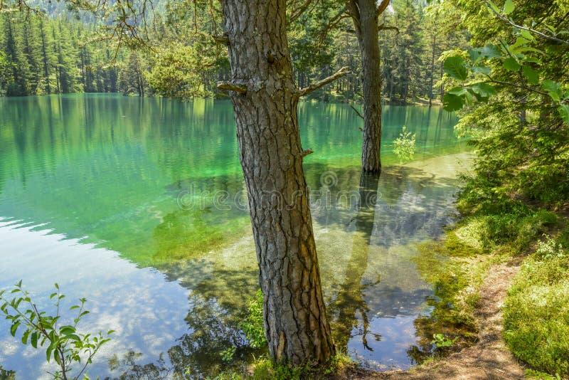Überfluteter Wald nach dem Tauwetter lizenzfreie stockbilder