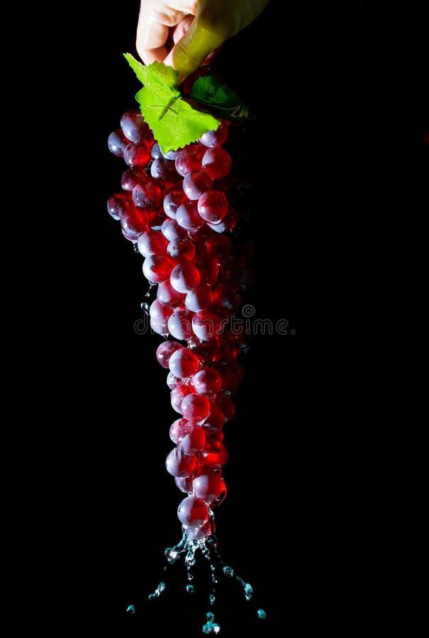 Übergeben Sie das Halten einer Weintraube mit Wasser, das unten lokalisiert auf einem Schwarzen fließt stockfoto