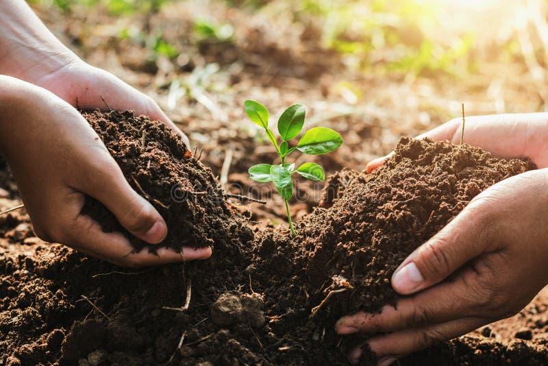 übergeben Sie das mater und Kind, die kleinen Baum im Garten pflanzend hilft Conc lizenzfreies stockfoto
