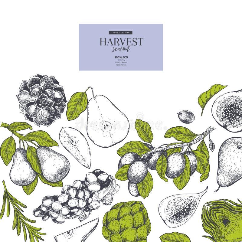 Übergeben Sie gezogene Fahne mit Herbsternteobst und gemüse - Gravierte Art des Vektors Weinlese Birne, Artischocke, Traube, Pfla stock abbildung