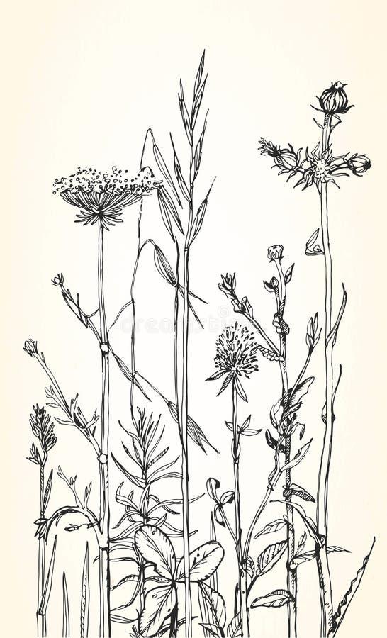 Übergeben Sie gezogene Illustration von Kräutern und von wilden Blumen vektor abbildung