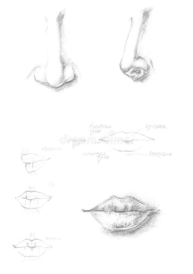 Übergeben Sie gezogene menschliche Nasen- und Lippenikonenillustration, graues Zeichen der Bürstenzeichnung, das ursprüngliche ha stock abbildung