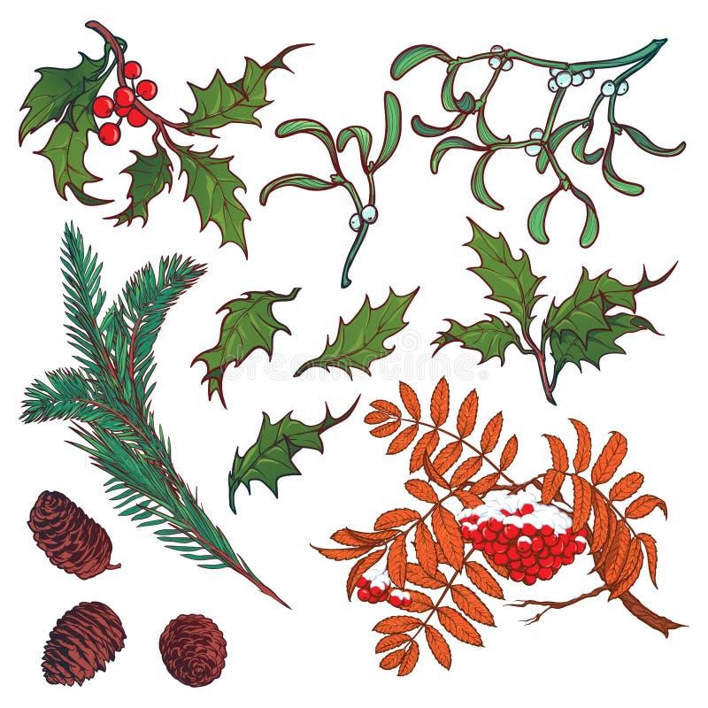Übergeben Sie gezogene Niederlassungen und Blätter von mäßigen Bäumen des Waldes Winter färbte Blumensatz lokalisiert auf weißem  vektor abbildung
