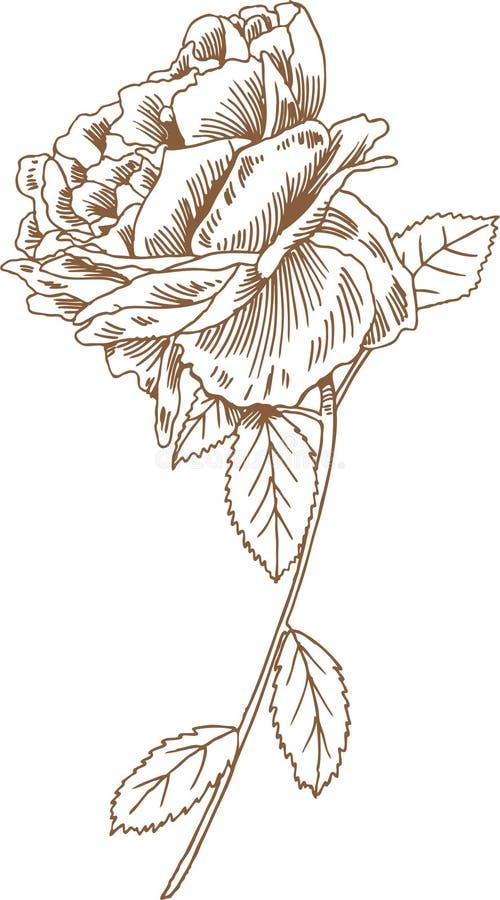 Übergeben Sie gezogene Rose vektor abbildung