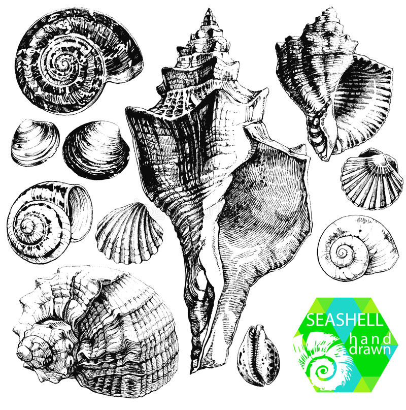 Seashells stock abbildung
