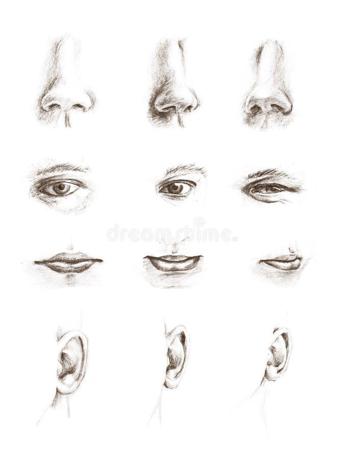 Übergeben Sie gezogene Skizzen der Augen, der Ohren, der Lippen und der Wekzeugspritzen lizenzfreie abbildung