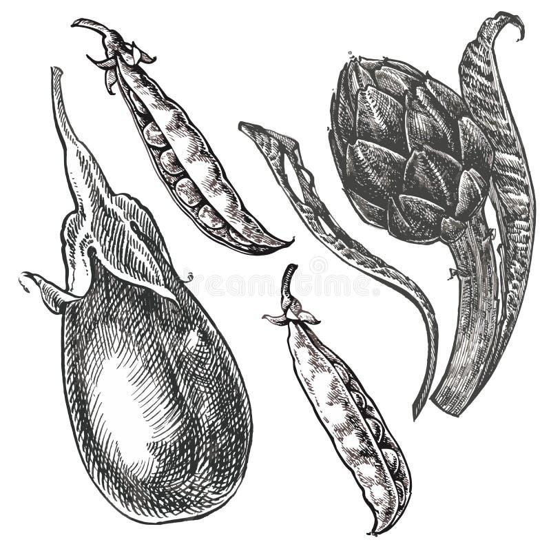Übergeben Sie gezogene Skizzenaubergine, -erbsen und -artischocke Abbildung getrennt auf weißem Hintergrund Frisches ökologisches stock abbildung