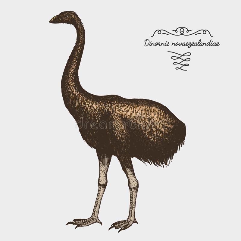Übergeben Sie gezogenem Vektor realistischen Vogel, grafische Art der Skizze, stock abbildung
