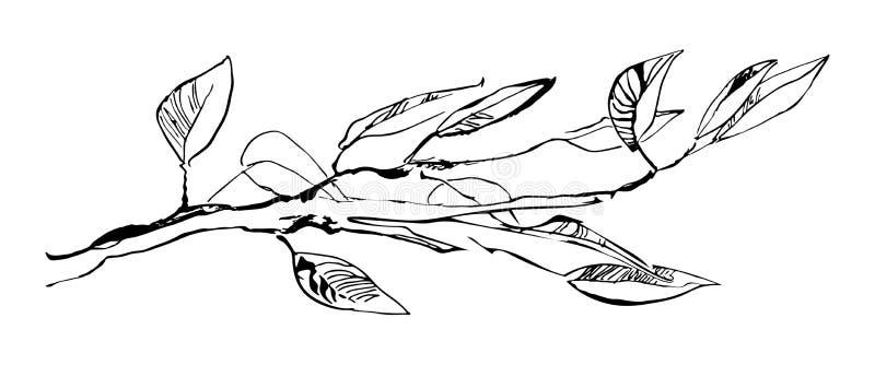 Übergeben Sie gezogenen Baumast mit den Blättern, die durch Tinte gemalt werden Schmutzart-Vektorillustration Schwarzes Bild auf  lizenzfreie abbildung