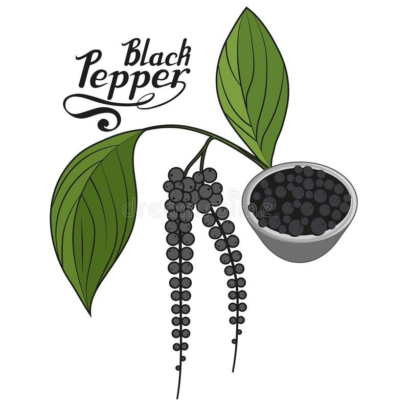 Übergeben Sie gezogenen schwarzen Pfeffer, würzigen Bestandteil, Logo des schwarzen Pfeffers, gesundes biologisches Lebensmittel, lizenzfreie abbildung