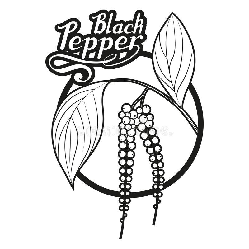 Übergeben Sie gezogenen schwarzen Pfeffer, würzigen Bestandteil, Logo des schwarzen Pfeffers, gesundes biologisches Lebensmittel, vektor abbildung