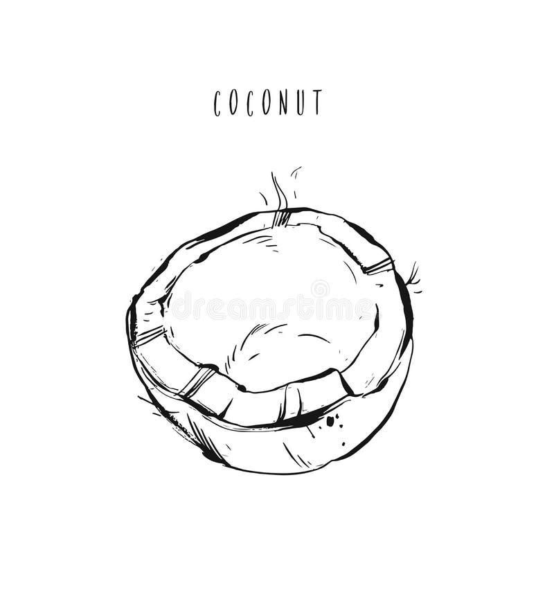 Übergeben Sie gezogener Vektorzusammenfassung die exotische Kokosnussillustration der tropischen Frucht, die auf weißem Hintergru vektor abbildung