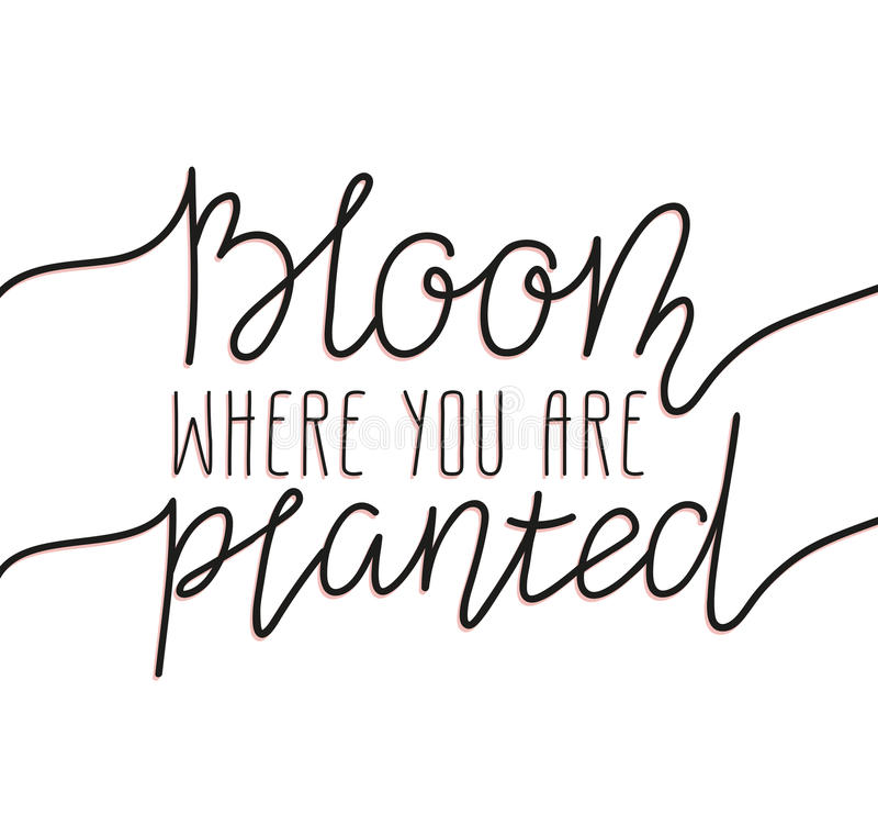 Übergeben Sie schriftliche Beschriftung - blühen Sie, wo Sie gepflanzt werden Stilvoller Vektorillustrations-, moderner und elega vektor abbildung