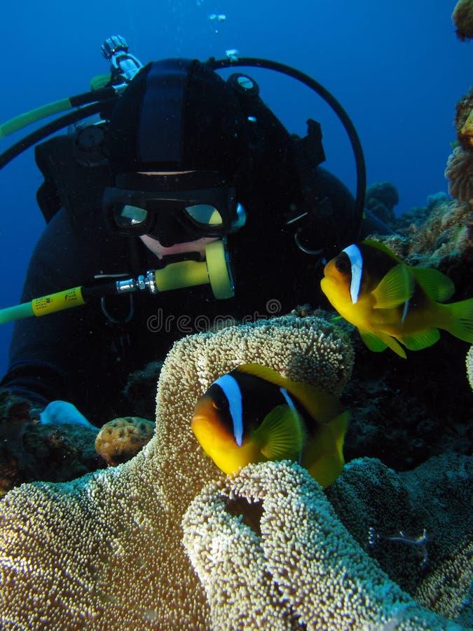 Überprüfen Sie heraus die Fische lizenzfreie stockfotos