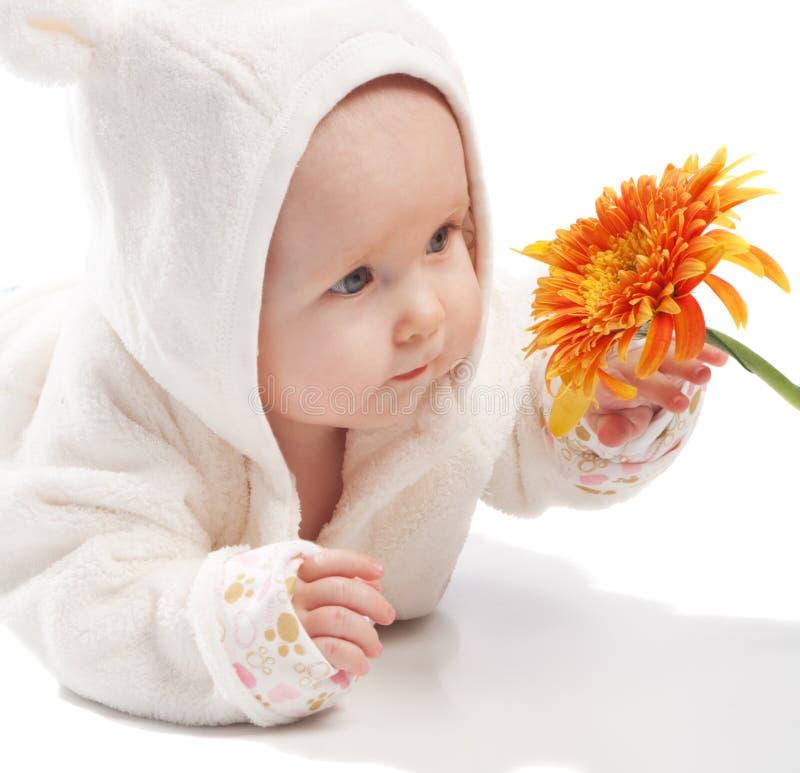 Überprüfengänseblümchen des Schätzchens stockbilder