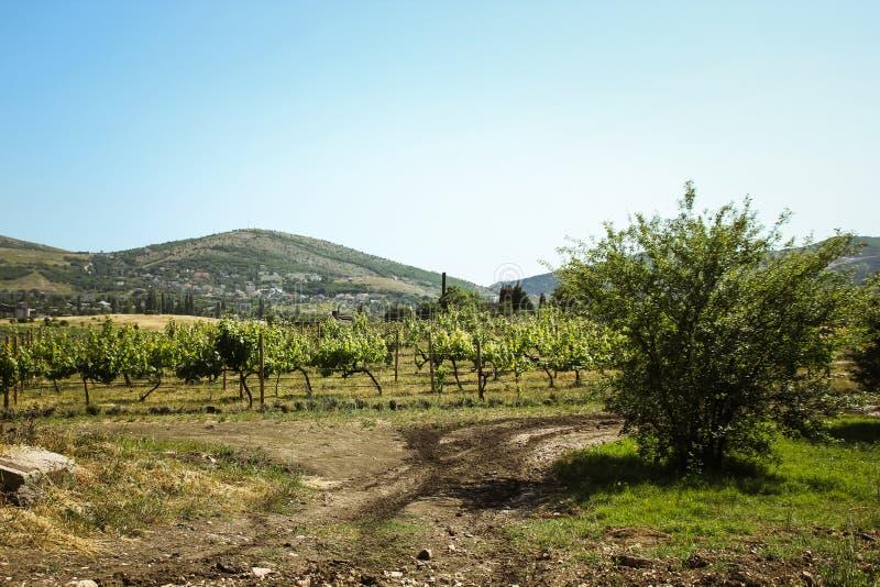 Überraschende Ansichten der Weinberge und der Berge von Krim und von blühendem Lavendel Sch?ne Landschaft von Bergen lizenzfreies stockfoto