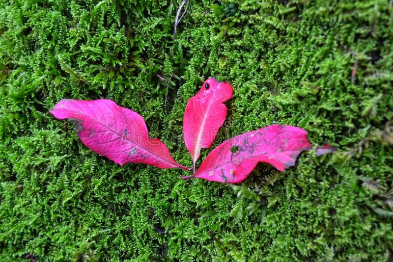 Überraschende Farben in der Natur stockbild