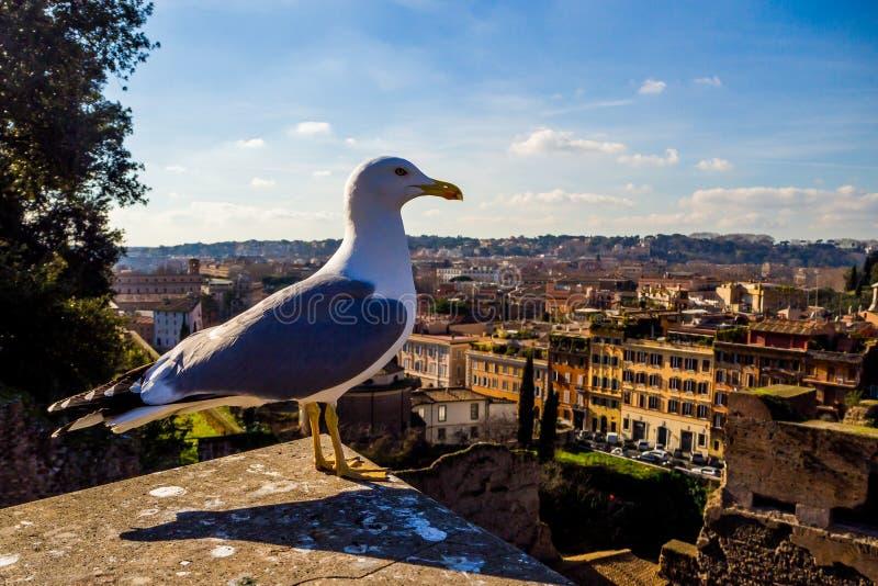 Überraschender sonniger Tag in Rom lizenzfreie stockfotografie