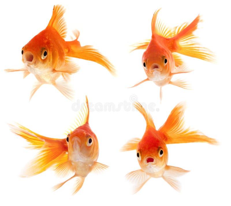Überrascht, Fische schauend stockfoto
