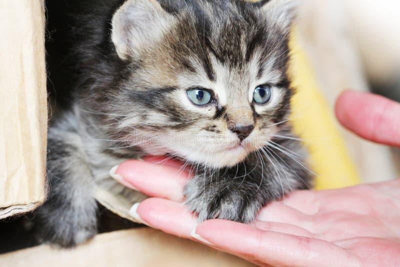 Überraschte nette yuong Katze, welche die neue Hosteß betrachtet Katze ` s Tatze, die an Hand Frauen liegt Angebote, zum Freunde  lizenzfreies stockbild
