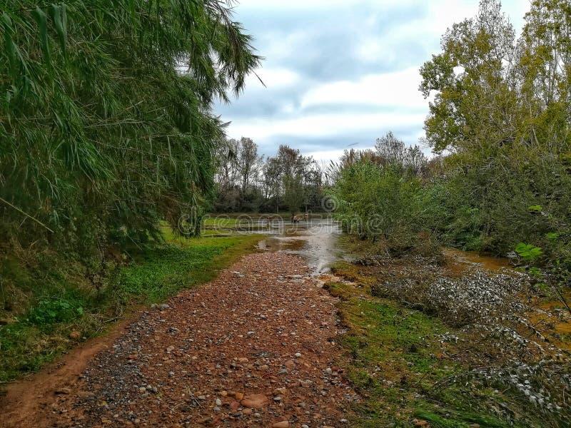 Überschwemmter Grünstreifen lizenzfreies stockbild