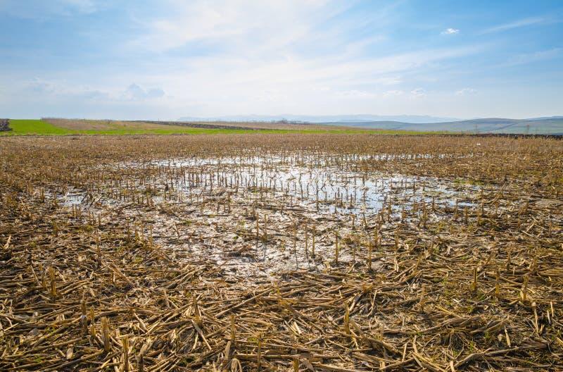Überschwemmtes Bauernhoffeld lizenzfreie stockbilder