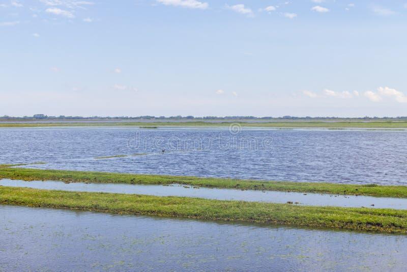 Überschwemmtes Feld in einem Bauernhofbauernhof und vegeation bei Lagoa tun Peixe LAK stockfotografie