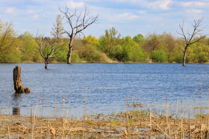 Überschwemmung des Flusses während des Frühlingshochwassers lizenzfreie stockbilder