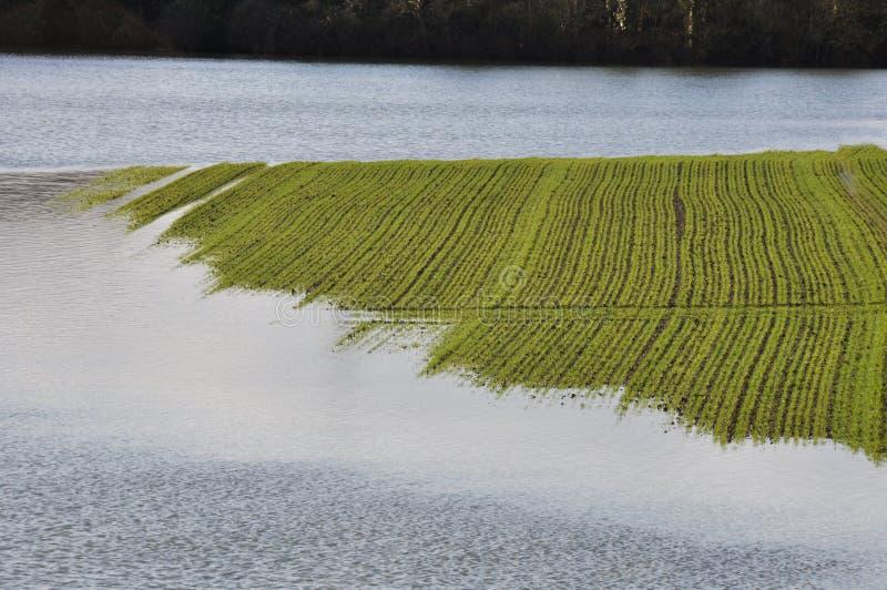 Überschwemmung vom Fluss Zadorra, baskisches Land stockbild
