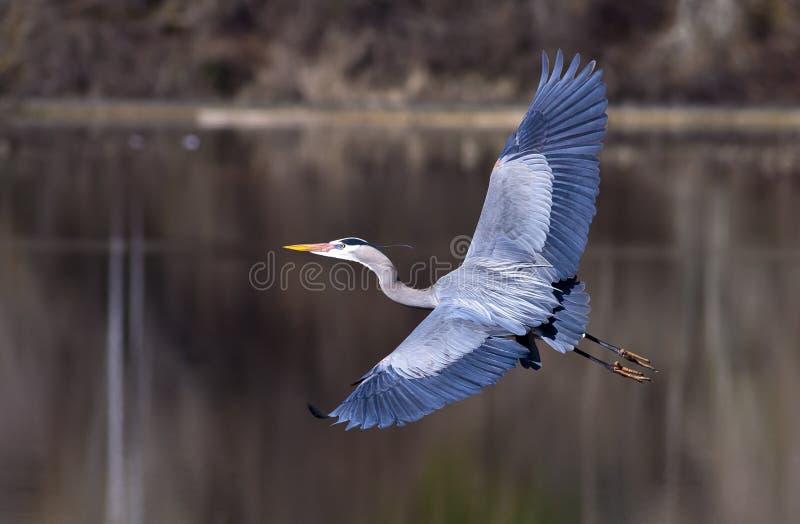 Überspannung des großen Flügels. stockfotografie