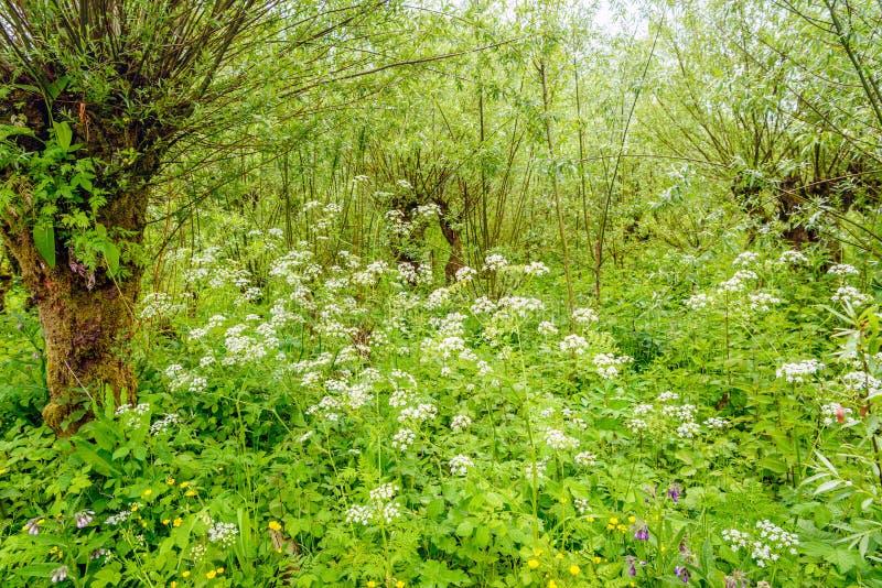 Überwältigend wachsende und blühende wild wachsende Pflanzen in einem niederländischen natu stockfoto