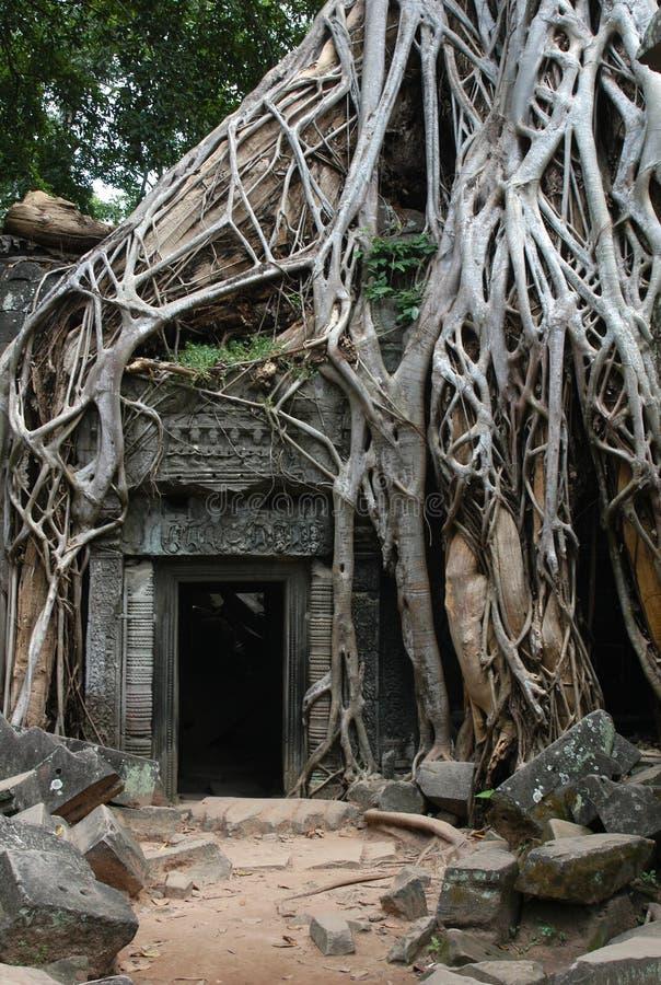 Überwucherte Khmer-Ruinen stockfotos