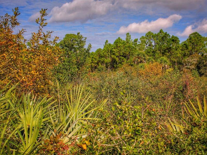 Überwucherte Wiese in Florida lizenzfreies stockfoto