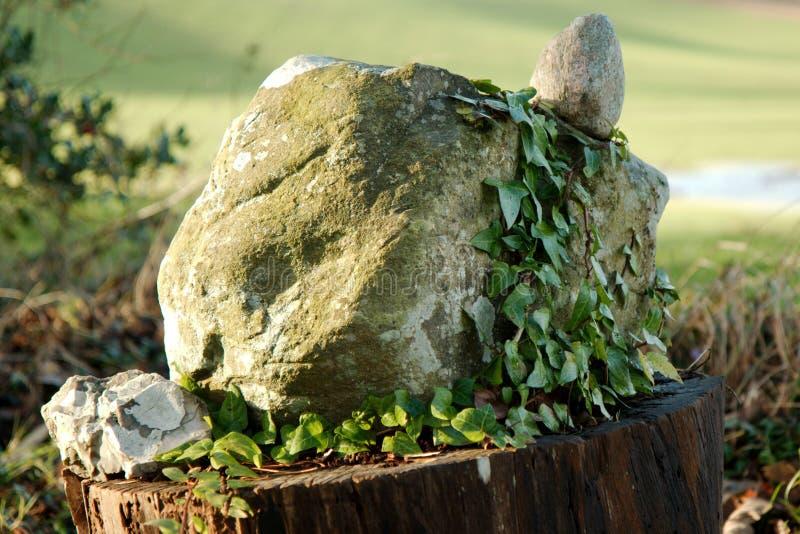 Überwucherter Felsen auf einem Klotz lizenzfreie stockfotografie