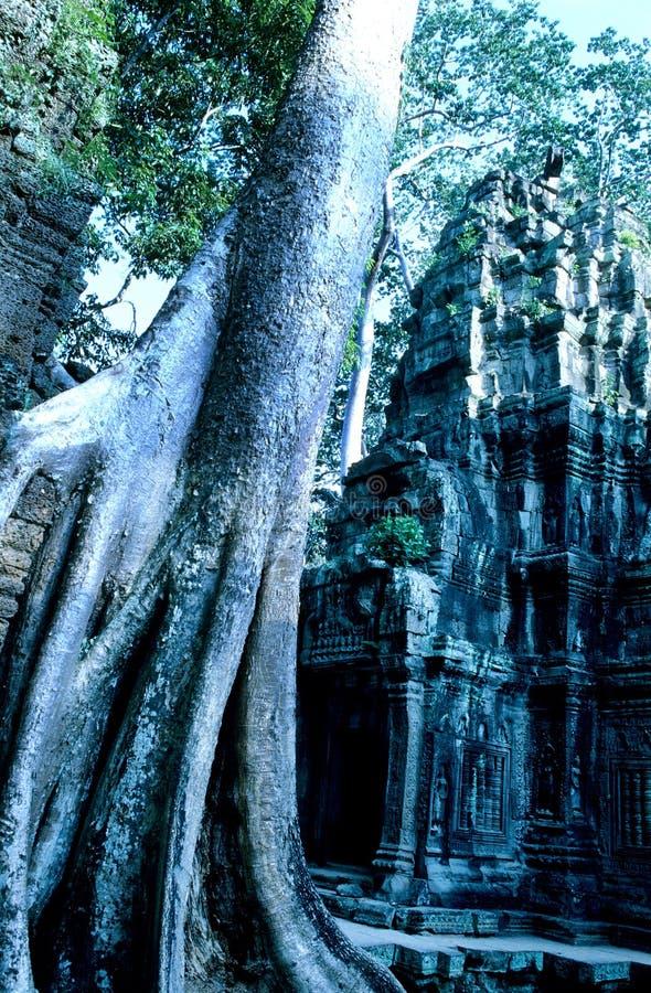 Überwucherter Tempel Ta Prohm, Angkor Wat Ruinen lizenzfreies stockfoto