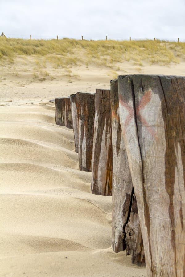 Überwuchertes Stranddetail stockfotos