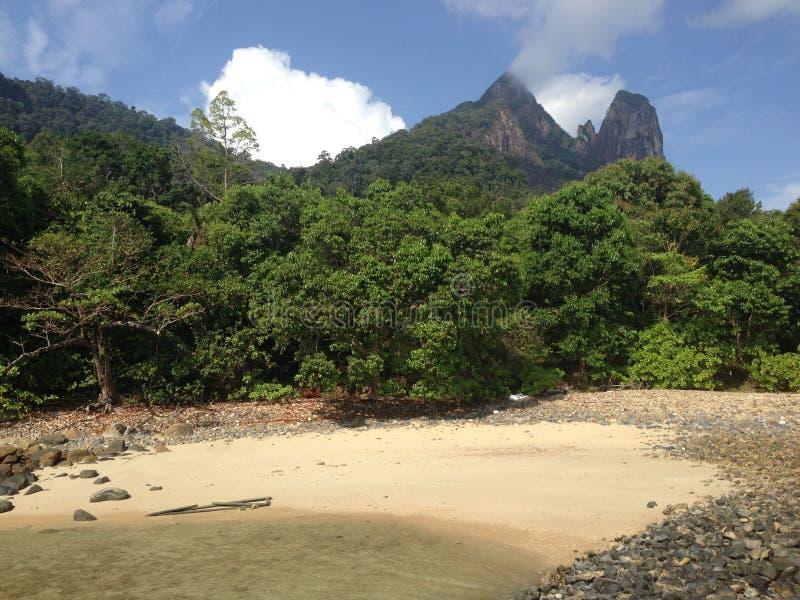 Üppige Bäume in der Tropeninsel stockfotografie