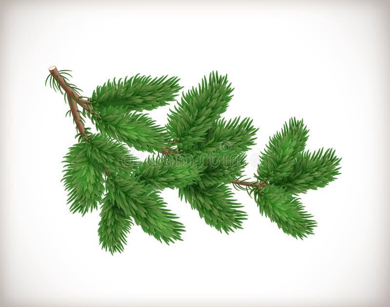 Üppige grüne Fichten- oder Tannenbaumniederlassung lokalisiert auf weißem Hintergrund Gegenstand oder Element für Weihnachten und stock abbildung