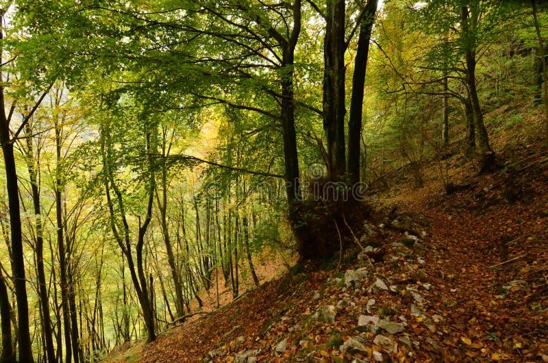 Üppige grüne und gelbe Blätter im tiefen Holz stockbilder